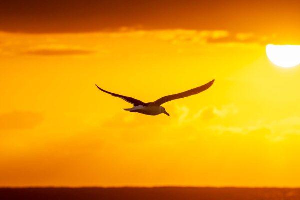 Foto de uma gaivota voando ao nascer do sol na praia
