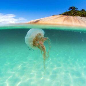 Água viva ilha do Campeche
