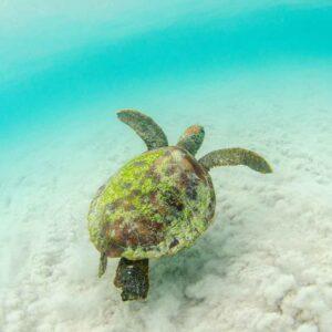 Tartaruga ilhas Galápagos