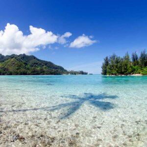 Foto da paisagem com a sombra de um coqueiro na água em Moorea Tahiti